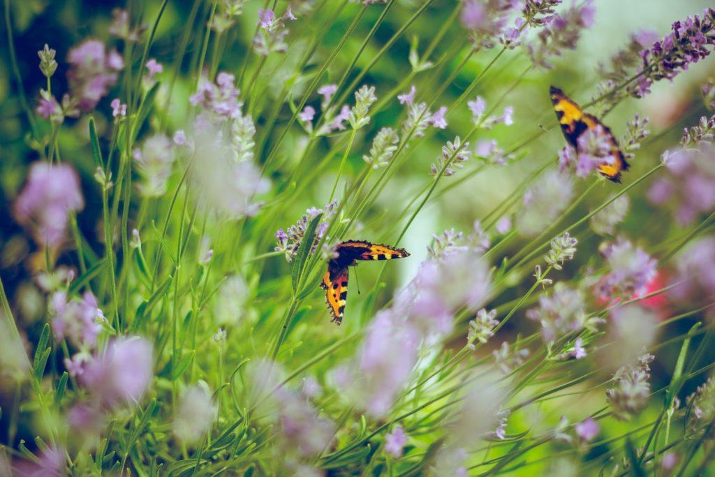 Tuin voor bijen