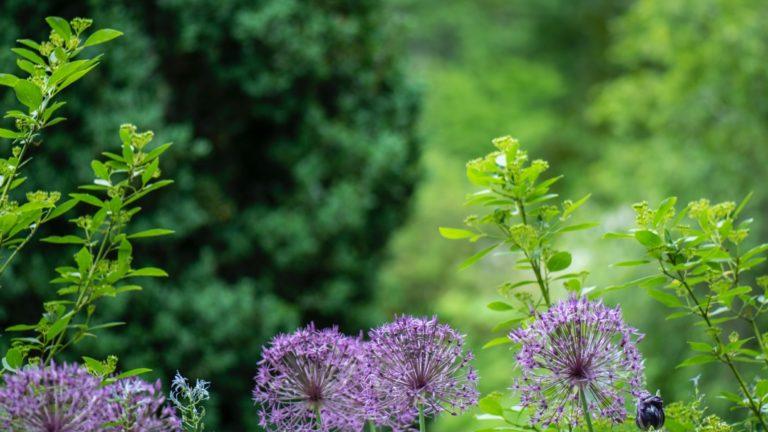 Hoe creëer je een duurzame tuin?