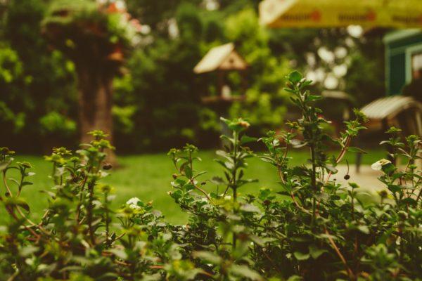De ideale tuin