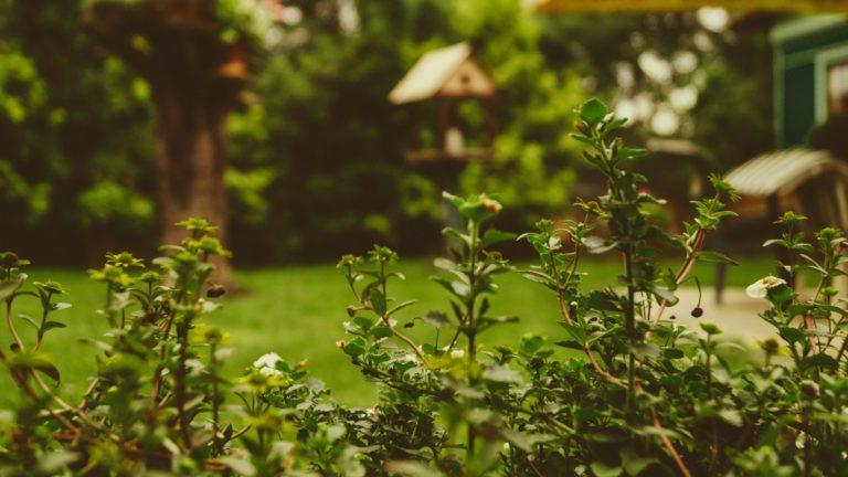 Wat is jouw ideale tuin?